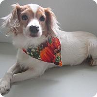 Adopt A Pet :: Tinkerbell - Holton, KS