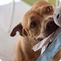 Adopt A Pet :: Ruby - Windermere, FL