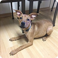 Adopt A Pet :: Jerome in CT - Manchester, CT