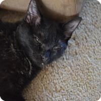 Adopt A Pet :: Jaden - Statesville, NC