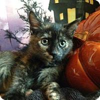 Adopt A Pet :: Lil ET - Vacaville, CA