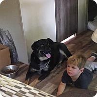 Adopt A Pet :: Django / Zander - Albemarle, NC