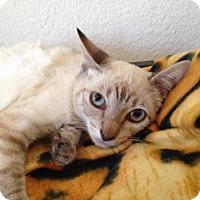 Adopt A Pet :: Tesla - Walnut Creek, CA