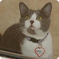 Adopt A Pet :: Tessa - East Hartford, CT