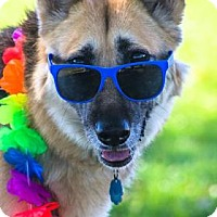 German Shepherd Dog Mix Dog for adoption in Las Cruces, New Mexico - Leyna