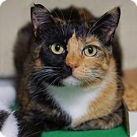 Adopt A Pet :: Loma - Alameda, CA
