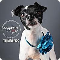 Adopt A Pet :: Tumblers - Omaha, NE
