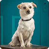 Adopt A Pet :: Princess - Owensboro, KY
