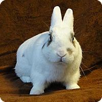 Adopt A Pet :: Dr. Pepper - Los Angeles, CA