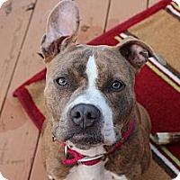 Adopt A Pet :: Lala - Reisterstown, MD