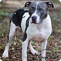 Adopt A Pet :: Miles - Orlando, FL