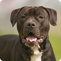 Adopt A Pet :: Cadence - Salem, OR