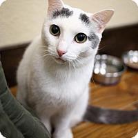 Adopt A Pet :: Vanessa - Oakland, CA