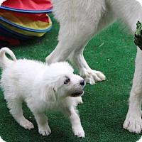 Adopt A Pet :: Cosmos - Austin, TX