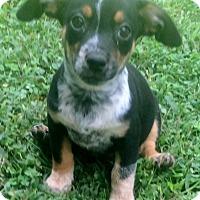 Adopt A Pet :: Trinity - Smyrna, GA