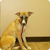 Adopt A Pet :: Simba - Oviedo, FL