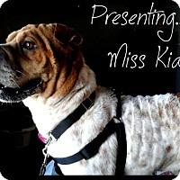 Adopt A Pet :: Kia *adopted* - Prescott, ON