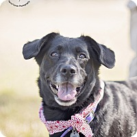 Adopt A Pet :: Tipper - Kingwood, TX