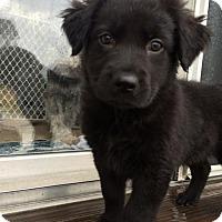 Adopt A Pet :: Schmidt - Dayton, OH