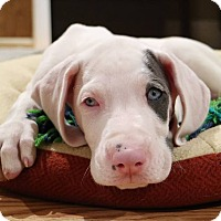 Adopt A Pet :: Jameson - Troy, MI