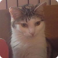 Adopt A Pet :: Tinker Bell - Columbus, OH
