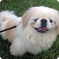Adopt A Pet :: Max - Fennville, MI