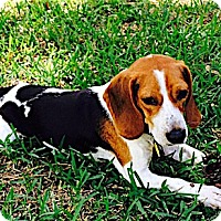 Adopt A Pet :: Barton - Houston, TX