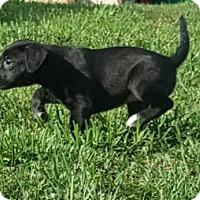 Adopt A Pet :: Gavin - Mechanicsburg, PA