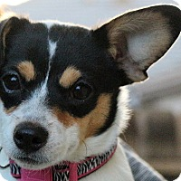 Adopt A Pet :: Penny-ADOPTED! - Tracy, CA