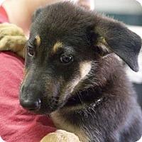 Adopt A Pet :: Gage - Oswego, IL