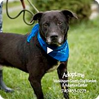 Labrador Retriever Mix Dog for adoption in Zanesville, Ohio - Sinclair - Urgent!