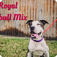 Adopt A Pet :: Royal - Cheney, KS