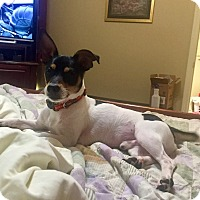 Adopt A Pet :: Toby - Woodstock, GA
