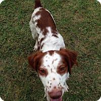 Adopt A Pet :: TX/Charlie - Texas, TX