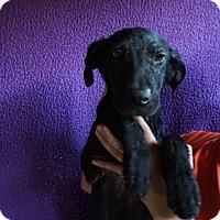 Adopt A Pet :: Aaley - Oviedo, FL