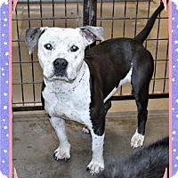 Adopt A Pet :: Ellie - San Jacinto, CA
