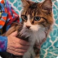 Adopt A Pet :: Romeo - Mackinaw, IL