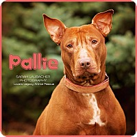 Adopt A Pet :: Pallie $14 - Cincinnati, OH