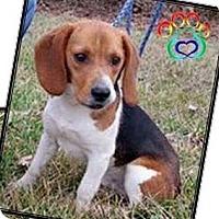 Adopt A Pet :: Silo (bonded to Jamie) - Newport, KY