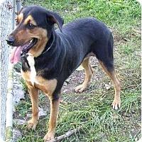 Adopt A Pet :: Tallulah - Key Biscayne, FL