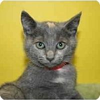 Adopt A Pet :: JASMINE - SILVER SPRING, MD