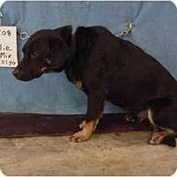 Adopt A Pet :: Rollie/Pending - Zanesville, OH