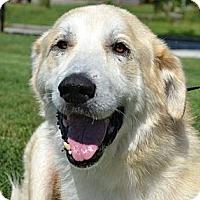 Adopt A Pet :: Avis - Brattleboro, VT