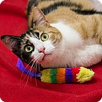 Adopt A Pet :: Squiggles - Chicago, IL