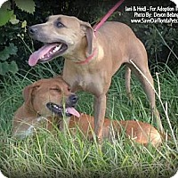 Adopt A Pet :: Heidi and Jani - Eustis, FL