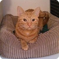 Adopt A Pet :: Rusty - Ringwood, IL