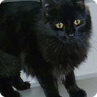 Adopt A Pet :: Black Magic - Hamburg, NY