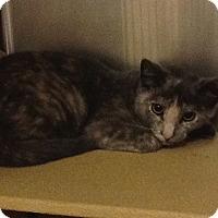 Adopt A Pet :: Darla - Colmar, PA