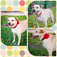 Adopt A Pet :: Sally - Houston, TX