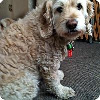 Adopt A Pet :: Dartz - Toronto, ON